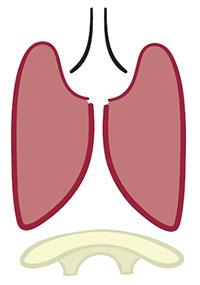 6L-diaphragm